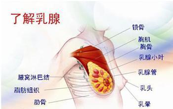【长沙催乳师罗玉】导致乳腺不通的的常见乳房疾病